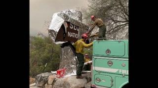 Envuelven en aluminio las gigantes secuoyas por avance de incendios en EEUU