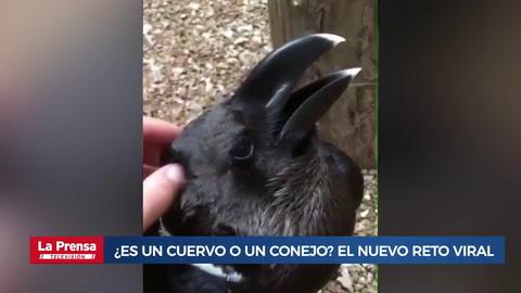 ¿Es un cuervo o un conejo? El nuevo reto viral que te confundirá