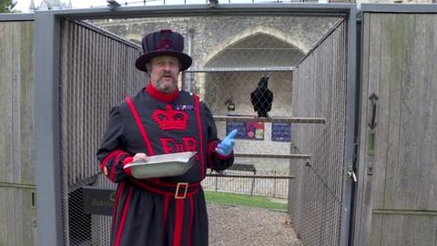 ¿Mal augurio para Inglaterra? Desaparece curvo de la Torre de Londres