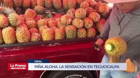 Piña Aloha, la sensación en Tegucigalpa