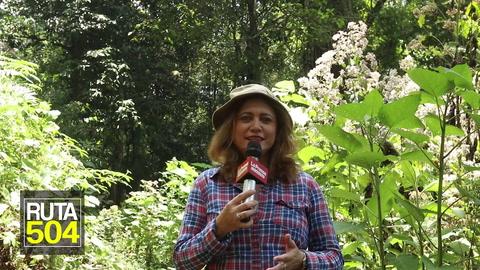 RUTA 504 Panamosab, exuberante vida silvestre y belleza natural