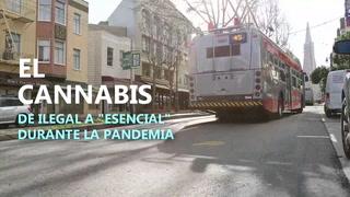 El cannabis,