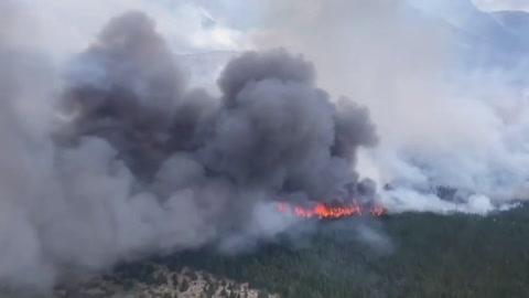 Incendio forestal devora 6.500 hectáreas de bosque en el sur de Argentino