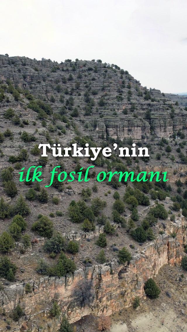 Türkiye'nin ilk fosil ormanı