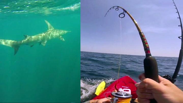 Kajakkfisker fikk hai på kroken – ble «tauet» i to timer