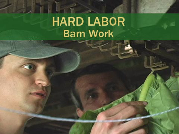 Hard Labor - Barn Work