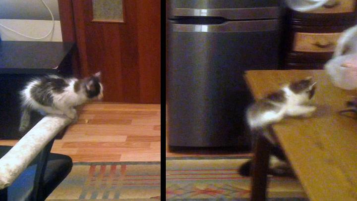 Utfordret «kjempesprang»: Kattungen nekter å gi opp