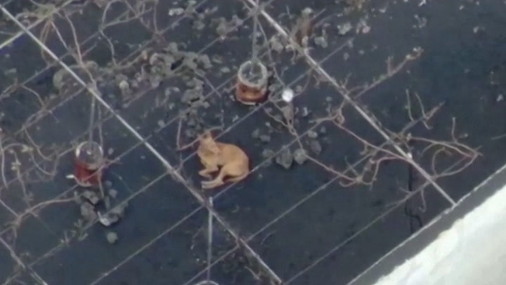 Drones feed dogs stranded by lava