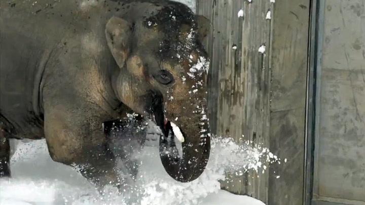 Dyreparken var snø-stengt - da kunne dyrene boltre seg