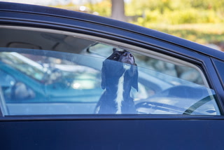 Summer temperatures in a car can be lethal to children or pets
