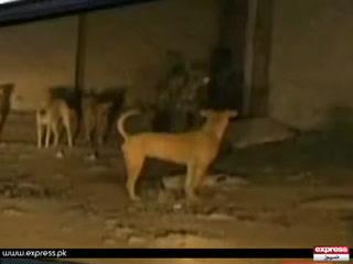 کراچی سمیت سندھ میں کتوں کے کاٹے کے بڑھتے واقعات سے عوام پریشان