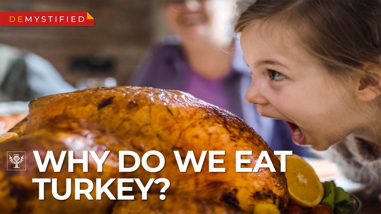 Demystified Video on Thanksgiving turkey