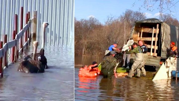 Strutser på dypt vann fikk hjelp av Putins menn