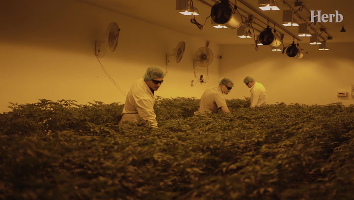 The Craft Growers Using Science To Create Perfect Strains