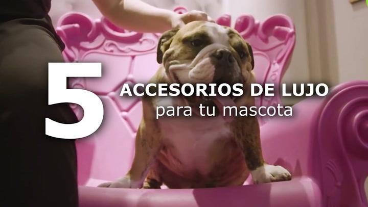 5 Accesorios de lujo para tu mascota