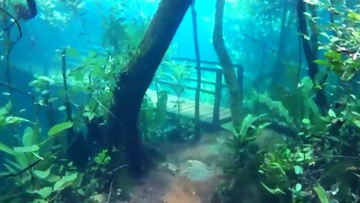 Det er noe rart med den vakre skogen