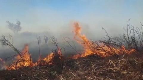 La biodiversidad del Delta del Paraná, amenazada por incendios históricos