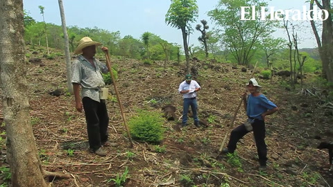 Honduras: Campesinos confundidos inician tarde la siembra