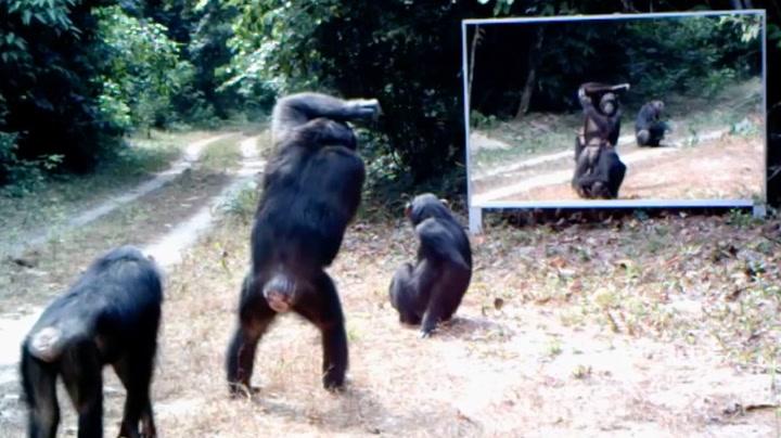 Når dyr ser sine speilbilder for første gang. Uvurderlig!