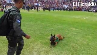 Killer, el perro que llamó la atención en las fiestas patrias