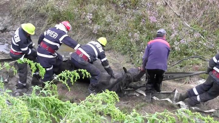 Hest sank dypere og dypere i gjørma – så kom redningen
