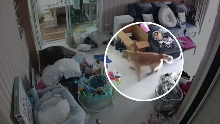 """นาตาลี เดวิส เคืองสุนัขโกลเด้นเพื่อนบ้านทำเดือดร้อน ลั่น """"แบบนี้ไม่โอเคเลยนะคะ"""""""