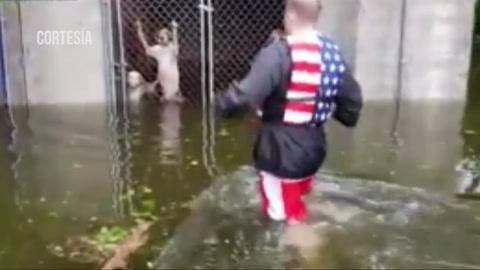 Rescatan a perros encerrados en sus jaulas inundadas de una perrera