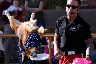 Jump! The Ultimate Dog Show at Springs Preserve in Las Vegas