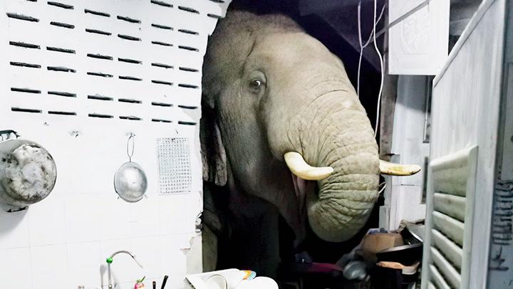ช้างบุกหาของกินกลางดึก เดินทะลุกำแพงเป็นรูโหว่ เจ้าของบ้านวอนคนช่วย