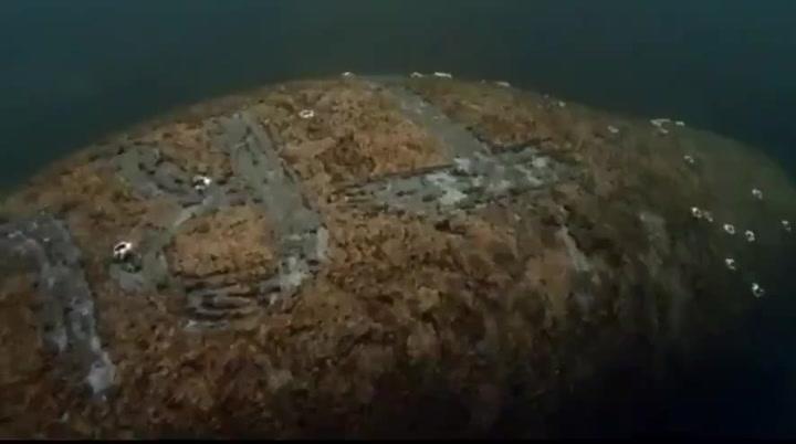Tallan la palabra Trump en el lomo de un manatí en aguas de Florida