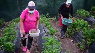 Mujeres diversifican agricultura en cordillera salvadoreña