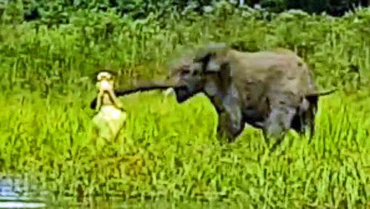 Elefantungen får krokodille på «kroken»