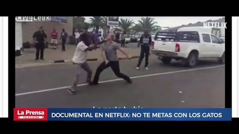 Documental en Netflix: No te metas con los gatos