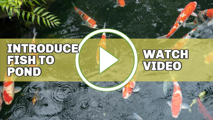 20 Beautiful Backyard Pond Ideas For All Budgets