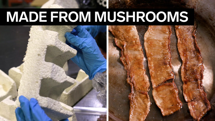 A biotech company is making vegan bacon, leather, and a Styrofoam-like packaging out of lab-grown mushrooms