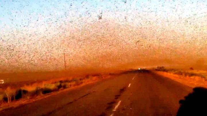 Grøss og gru: Insektsinvasjon av bibelske dimensjoner