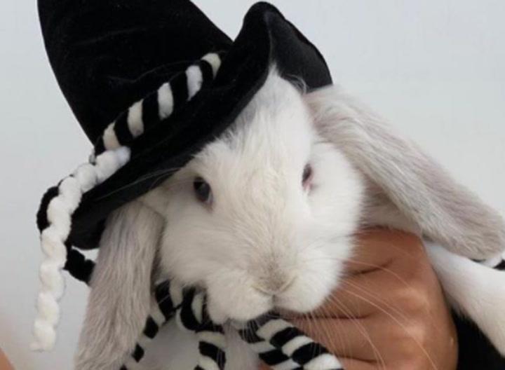 El conejo de Shakira, protagonista en este Halloween