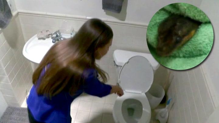Hjelp! Se hva som dukket opp da hun skulle sette seg på toalettet