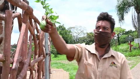 Animales de zoológico hondureño sobreviven con donaciones durante pandemia
