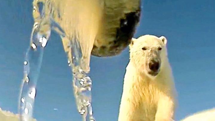 Det isbjørnen trenger for å overleve