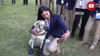 Frida, la perra rescatista mexicana, se jubila