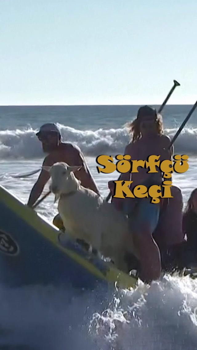 Sörfçü Keçi