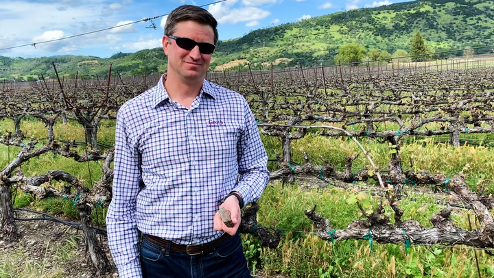 In the Vineyard at Groth: Cover Crops and Ancient Geology