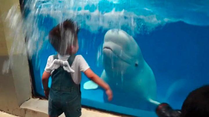 Rampete hval overrasker gutt