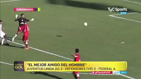 El perro que salvó un gol en la línea es de Gualeguaychú