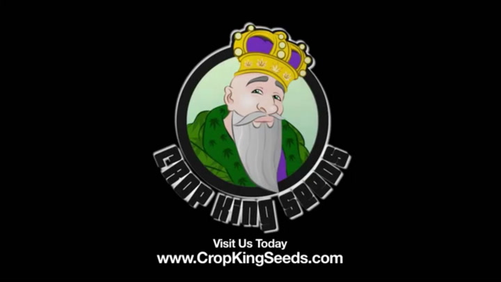KNOW THE DIFFERENCE BETWEEN MALE AND FEMALE MARIJUANA PLANTS - CROP KING SEEDS