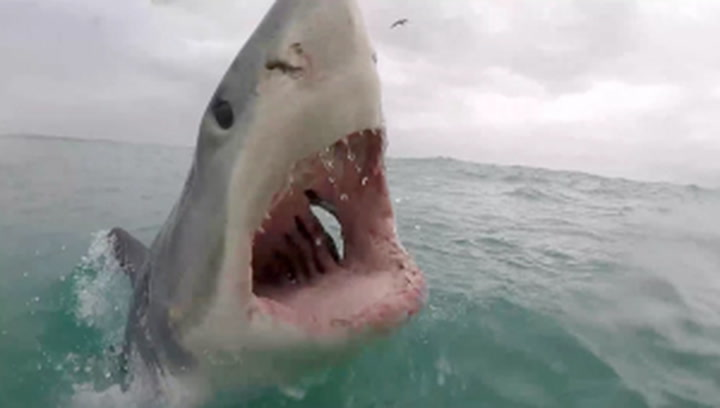 Shark lunges at boat in incredible real-life 'Jaws' moment
