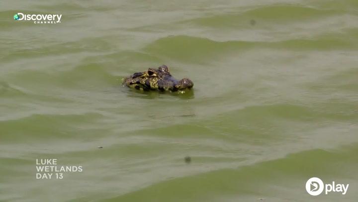Blikkenslager bader med alligatorer i nyt overlevelsesprogram