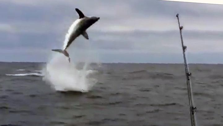Fikk «flyvende hai» på kroken