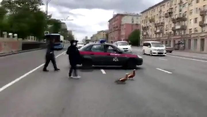¡Stop! Detienen el tráfico para dejar pasar a una familia de patos en Rusia